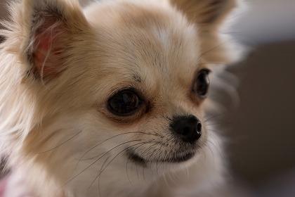 アイキャッチ犬