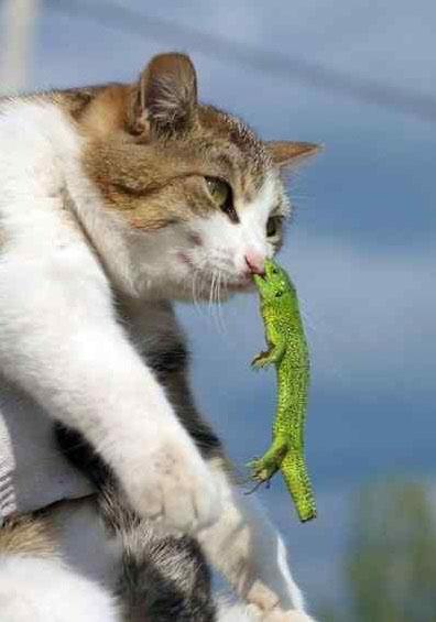 猫とトカゲ