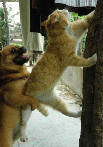 犬と猫 協力