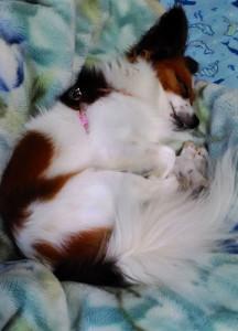 犬 疲れたから寝る